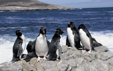 Premier Oil and partners have hit pay in the Falkland Islands