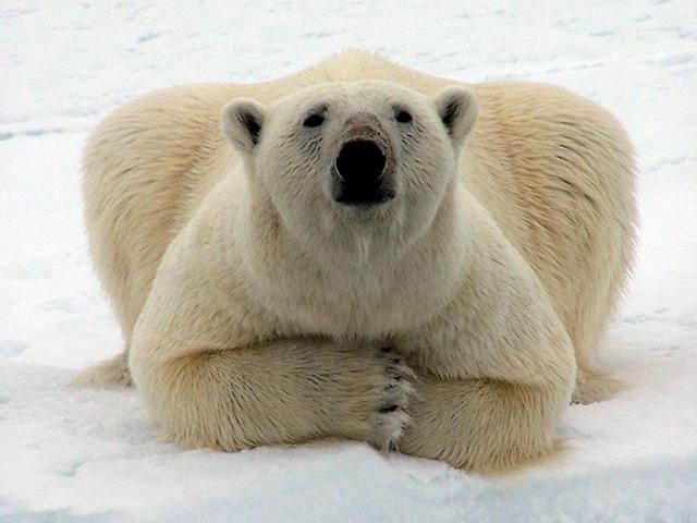 Alaska North Slope