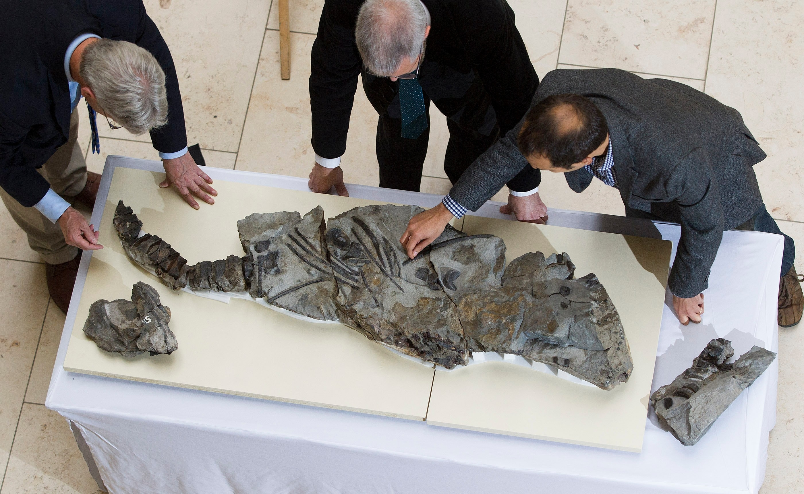 The fossil of a fierce predator that prowled the oceans 170 million years ago is unveiled by scientists for the first time at the National Museum of Scotland. The fossilised skeleton of the dolphin-like animal – named the Storr Lochs Monster – was found on the Isle of Skye in 1966 by Norrie Gillies.