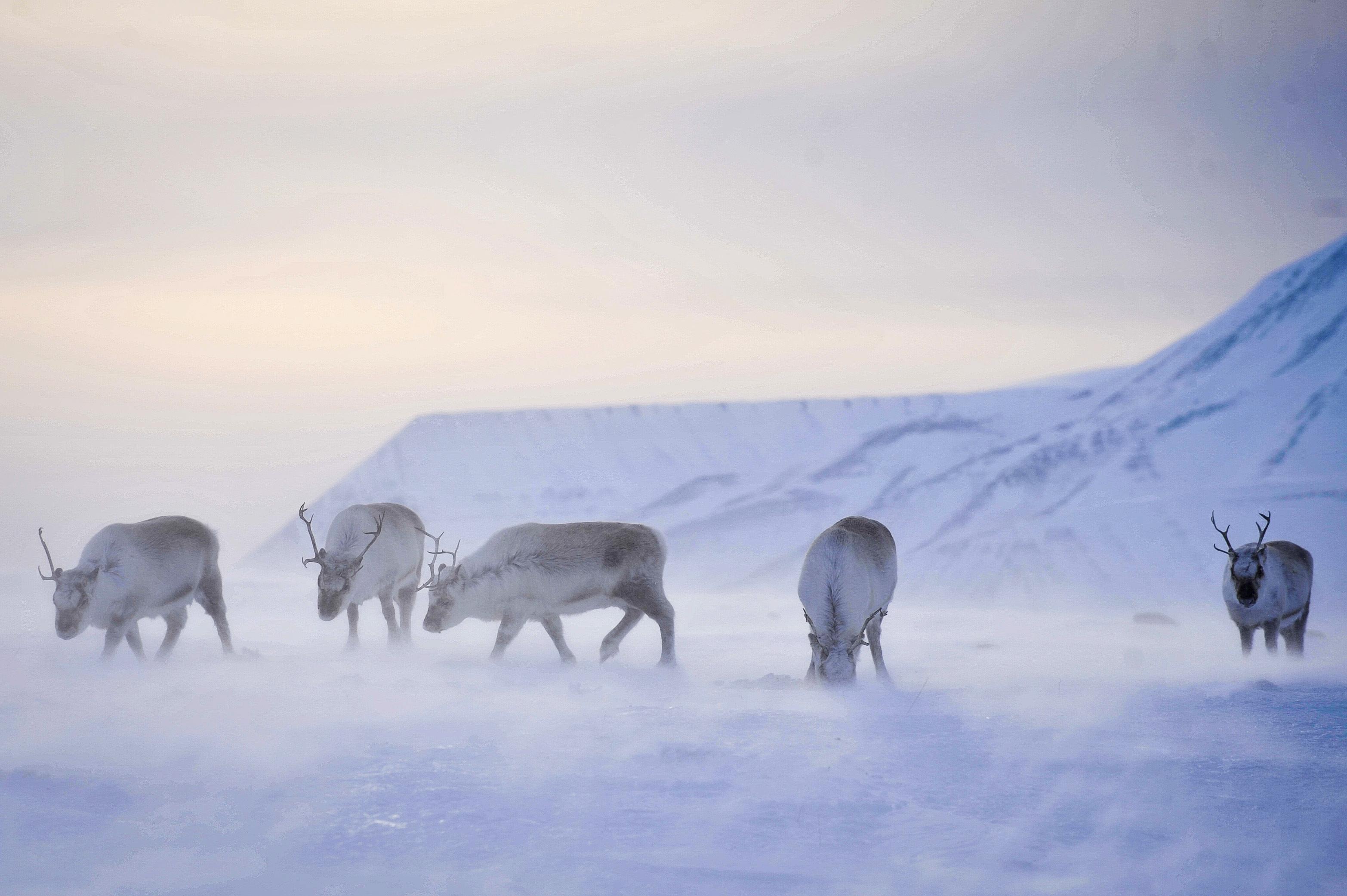 Polar news