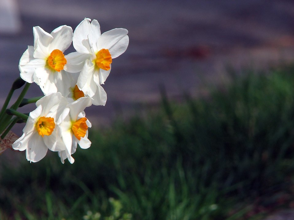 A wind turbine is to be designed like a daffodil.