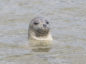 A young grey seal was found dead at the Nigg Bay site in September