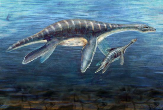 An artist impression of a plesiosaur. AP Photo/National Science Foundation