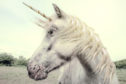 A unicorn is a startup company valued at over $1 billion.
