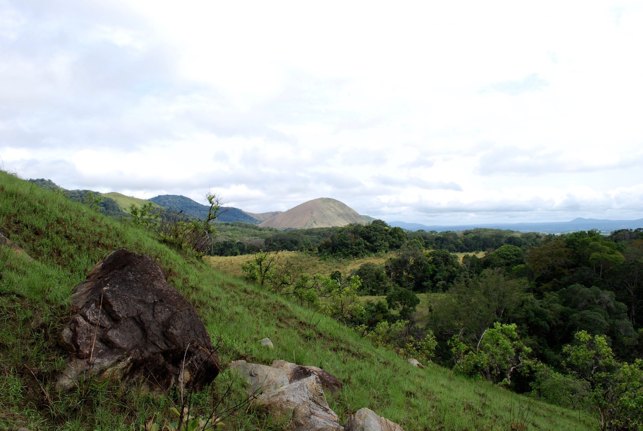 Gabon cashes carbon cheque for forestry support